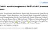 ChAdOx1重组腺病毒载体疫苗在恒河猴中改善肺炎症状