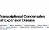 转录因子与Mediator通过液-液相分离形成的转录凝集体的失调导致相关疾病的发生