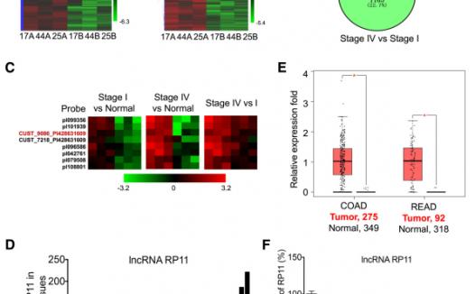 文献解读:lncRNA高分的常规分析思路