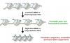郑庆飞博士等揭示肽酰基精氨酸脱亚氨酶在组蛋白糖化表观遗传学调控过程中的新功能