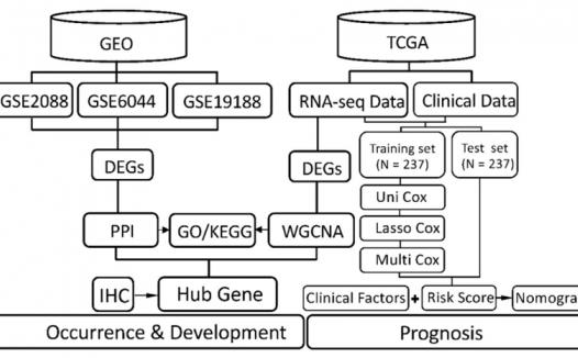 利用WGCNA识别肺鳞状细胞癌关键基因