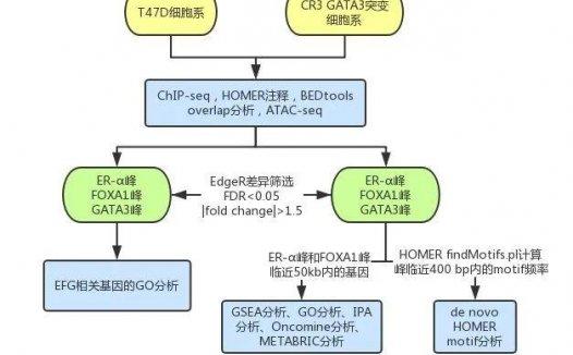 文献解读:单基因新套路发高分期刊思路