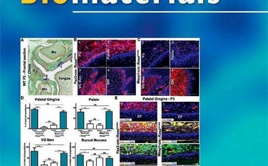 Biomaterials中科院1区 影响因子10分 审稿速度快