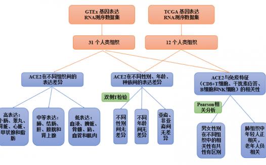 GTEx联合TCGA纯生信分析文章思路