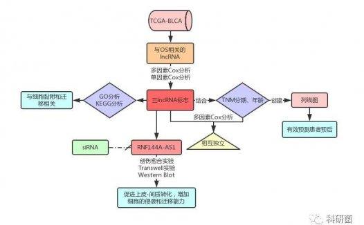 文献解读:非编码RNA结合临床预后生信分析思路