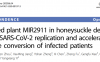 临床试验证实金银花可抑制新冠病毒复制 加速患者好转