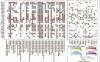 scatterpie绘制气泡饼图及corrplot绘制相关性图
