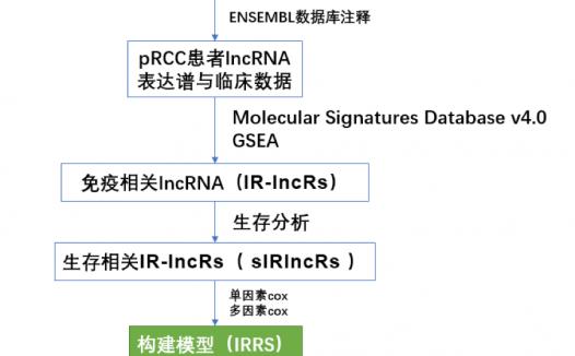 免疫相关lncRNA预后模型纯生信分析文章