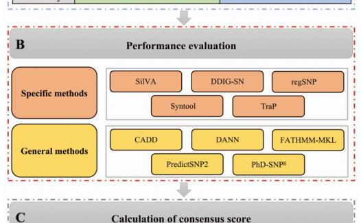 有害同义突变预测的计算方法的比较与整合