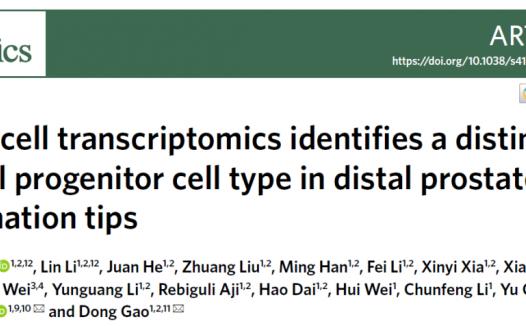 高栋/陈洛南/陈俞合作发现前列腺干细胞身份并证实其参与前列腺肿瘤的起始