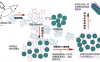 单克隆抗体与多克隆抗体有啥不同?