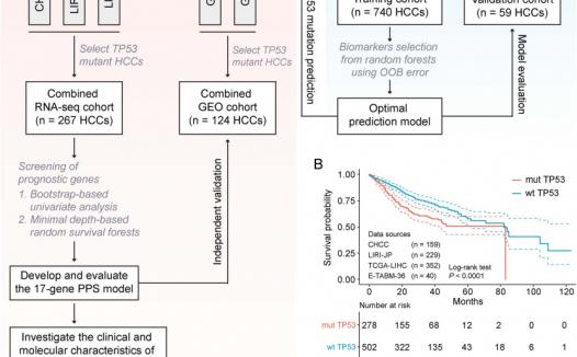 文献解读:肝癌单基因突变新生信分析思路