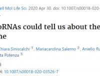 X染色体上的microRNA研究思路