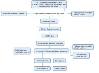 m6A RNA甲基化调节因子的鉴定与筛选套路,学会这篇4分+SCI就够了