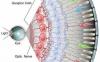 OSK——视力逆转生物钟