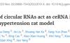文献详解 ceRNA机制研究
