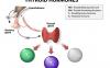 三碘甲状腺原氨酸(T3)ELISA试剂盒