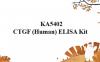 """""""广谱型""""KA5402 CTGF(Human)ELISA试剂盒相关研究"""