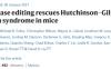 Nature解读:体内碱基编辑治疗小鼠Hutchinson-Gilford早衰综合征