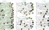 自噬研究线上工具:THANATOS数据库、人类自噬数据库、iLIR数据库