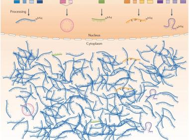 【新手攻略】非编码RNA文章插图画教程