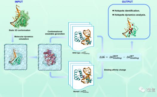 HISNAPI 预测蛋白质-核酸界面热点残基动态分析