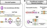 Cre-LoxP系统:基因编辑动物技术