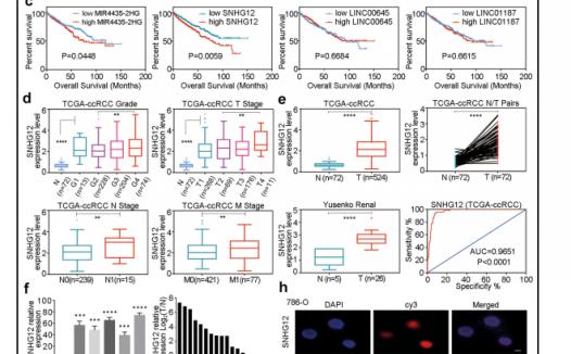 适合模仿的生物信息学 lncRNA结合肿瘤的研究思路