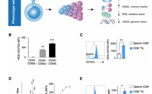 文献解读:如何用CRISPR技术结合生信分析发表高分文章